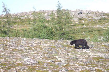 À la découverte des ours noirs