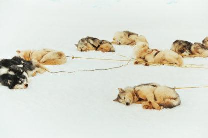 Découverte de la banquise avec les Inuits